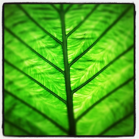Green Structure