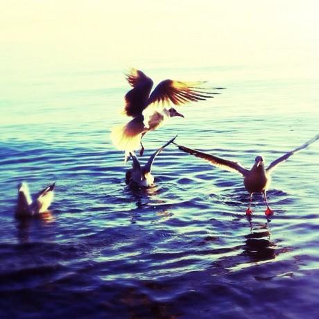 Meet the Gulls, edit II