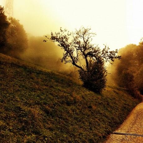 Tree in foggy Autumn