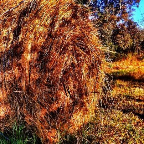 Sunset Light - Hay Bale I