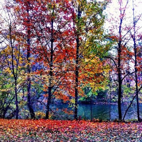 Colorful Fall in Langenargen