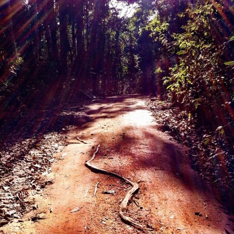Lightful Path