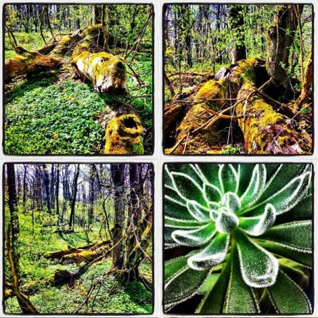 In the woods - 4er Set