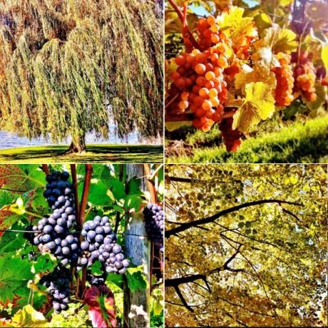 Autumn views - 4er Set