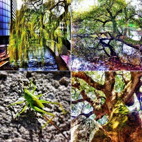 Tree Greens - 4er Set