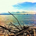 Lake View - driftwood