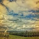 Clouds magic to the horizon