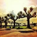 Lakeside Mood