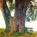 Holy Tree Lake View - edit II