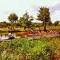 Dragon Boat Race I