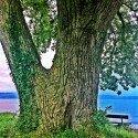 Holy Tree Lake View