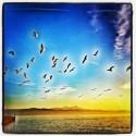 Gulls Party
