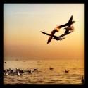 Gulls Crowd in the Air