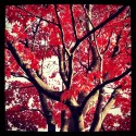 Tree Art - Red Nature