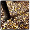 Tree in Autumn Mood