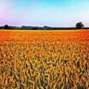 Field in the Sun