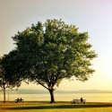 Tree and peaceful view