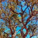 Corsica - Tree View