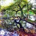 Tree in Water - wonderful Walk