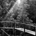 Bridge in early Sunlight