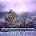 Hay Balls in Winter Mood