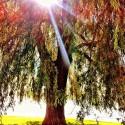 Light throu' the tree