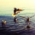 Meet the Gulls #Aviary