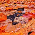 Leaves with waterdrops