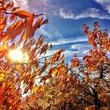 Sky in Autumn