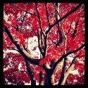 Tree Art - Red Nature