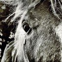 Eye of Pony Moritz