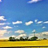 Through blue skies and vivid rape