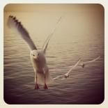 Meet Gulls III