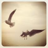 Meet Gulls IV