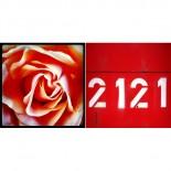 Rosezahlen - 2er Set